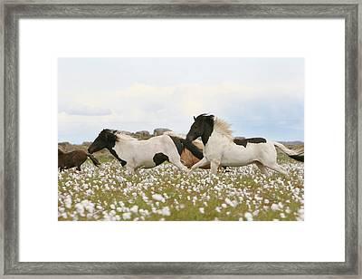 Running Horses Framed Print by Gigja Einarsdottir
