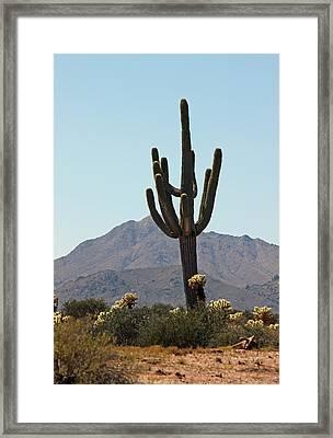 Saguaro Scenic IIi Framed Print