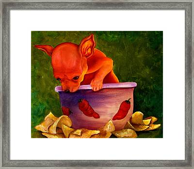 Salsa Chihuahua Framed Print by Gail Mcfarland