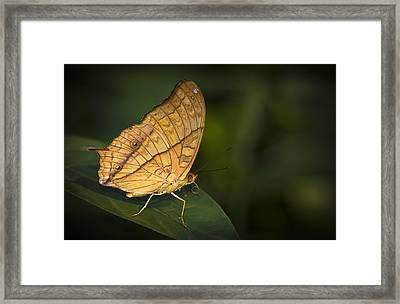 Saturn Butterfly Framed Print