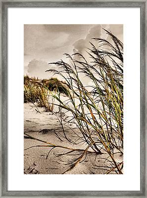 Sea Oats Framed Print by Kristin Elmquist