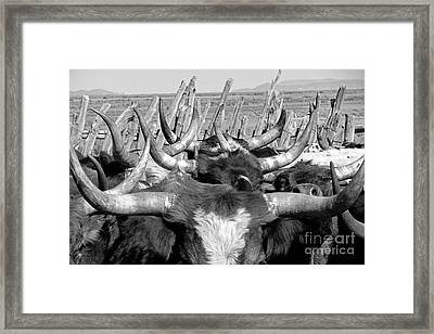 Sea Of Horns Framed Print by Megan Chambers