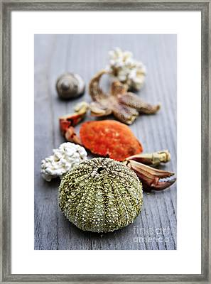 Sea Treasures Framed Print by Elena Elisseeva