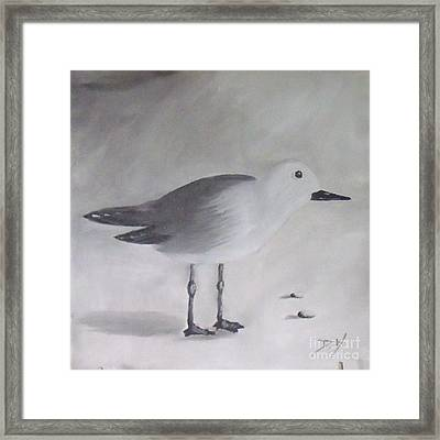 Seagull Framed Print by Debra Piro