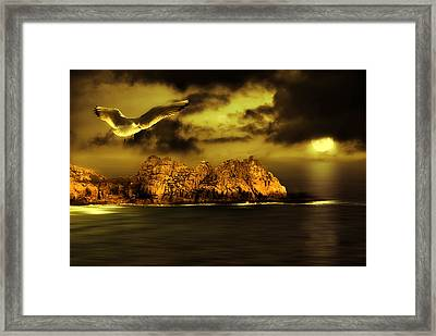 Seagull Flight Framed Print by Jaroslaw Grudzinski