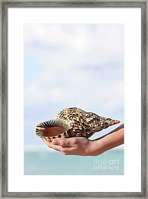 Seashell In Hand Framed Print