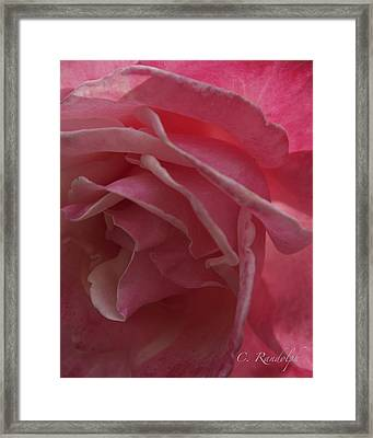 Framed Print featuring the photograph Seductive Blush by Cheri Randolph