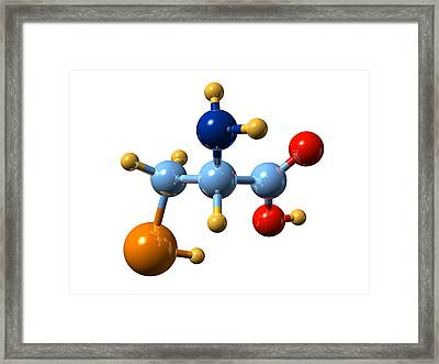 Selenocysteine, Molecular Model Framed Print