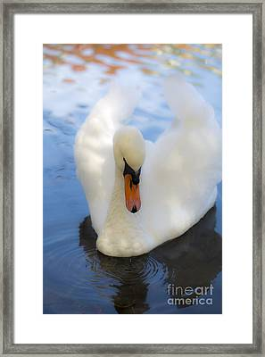 Serenity  Framed Print by Leslie Leda