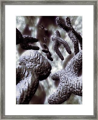 Sex Chromosomes Framed Print by Coneyl Jay