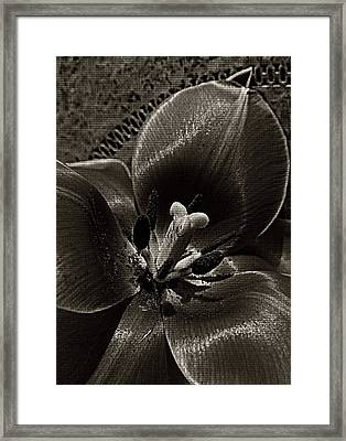 Shades Of Gray Framed Print by Chris Berry