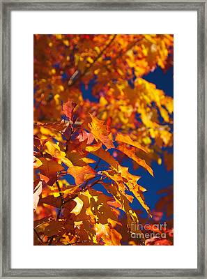 Sierra Autumn Leaves In Orange And Gold Framed Print by ELITE IMAGE photography By Chad McDermott