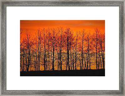 Silhouette Of Trees Against Sunset Framed Print by Don Hammond