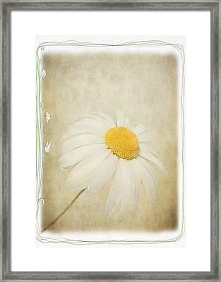Simple Daisy Framed Print