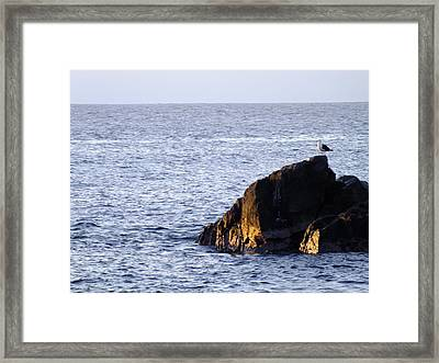 Sin Titulo Framed Print by Karin Cortez