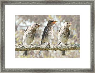 Sing Sing Sing Framed Print by Amy Tyler
