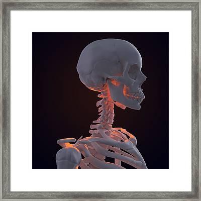 Skeleton, Artwork Framed Print by Andrzej Wojcicki
