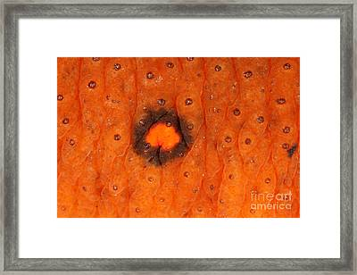 Skin Of Eastern Newt Framed Print by Ted Kinsman