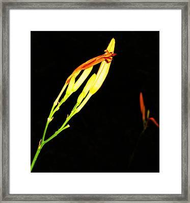 Sleeping Iris Framed Print by Todd Sherlock