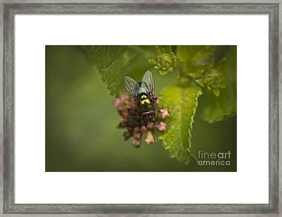 Small Wonder Framed Print by Kim Henderson