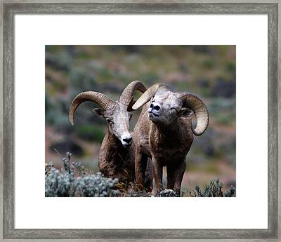 Framed Print featuring the photograph Smile by Steve McKinzie