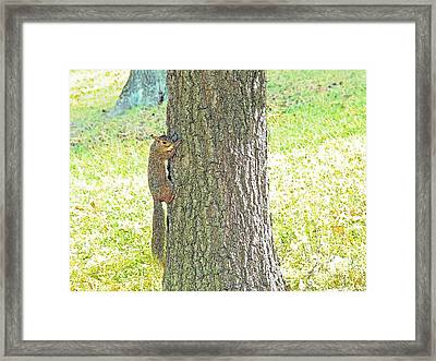Smiling Squirrel Framed Print by Joseph Hendrix