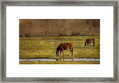 Snacking Framed Print by Rebecca Cozart
