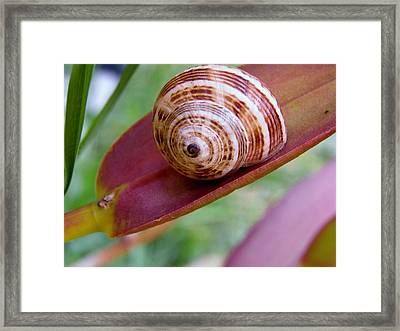 Framed Print featuring the photograph Snail On Leaf by Werner Lehmann
