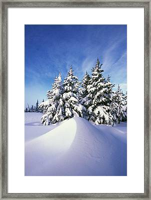Snow-covered Pine Trees Framed Print by Natural Selection Craig Tuttle