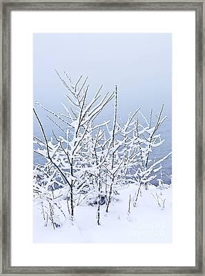 Snowy Trees Framed Print by Elena Elisseeva