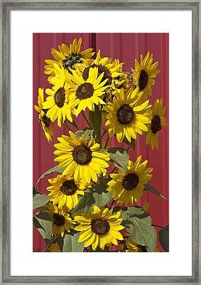 So Many Sunflowers Framed Print by Elvira Butler