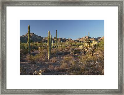 Sonoran Desert Scene With Saguaro Framed Print by George Grall