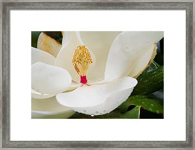 Southern Icon Framed Print by Dan Wells