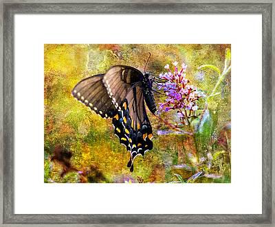 Spicebush Butterfly Looking Pretty Framed Print by J Larry Walker