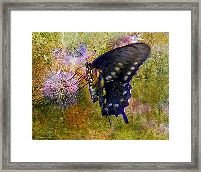 Spicebush Swallowtail Butterfly Framed Print