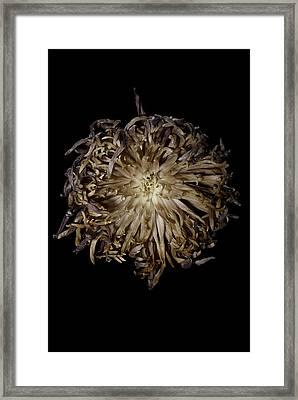 Spiky Flower Framed Print by Nathaniel Kolby