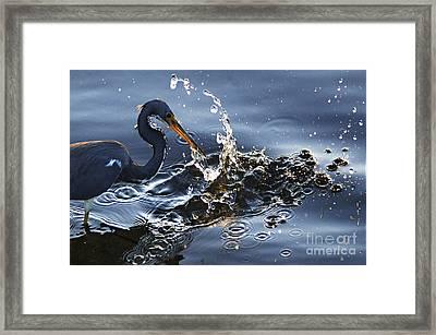 Splash Framed Print by Bob Christopher