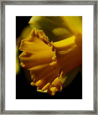 Splash Of Yellow Framed Print by Karen Harrison