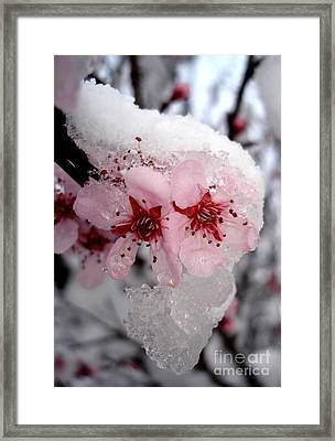 Framed Print featuring the photograph Spring Blossom Icicle by Kerri Mortenson