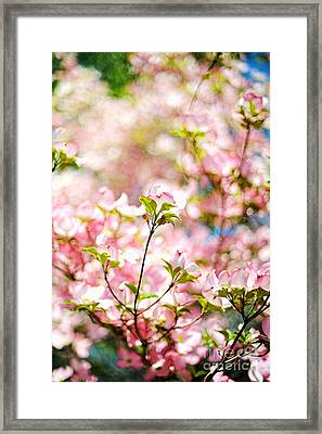 Spring Blossoms Framed Print by HD Connelly