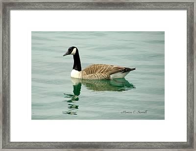 Spring Collection - Goose In Bay Harbor Framed Print