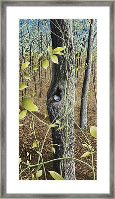Springtime At Collins Creek Framed Print by Mary Ann King