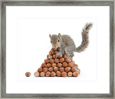 Squirrel And Nut Pyramid Framed Print by Mark Taylor