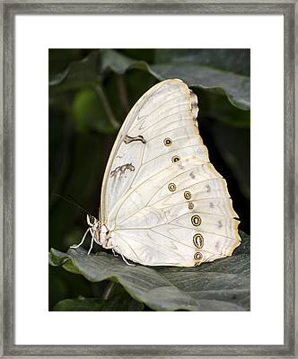 Stand Out Framed Print by Heather Applegate