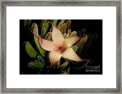 Starfish Flower Framed Print