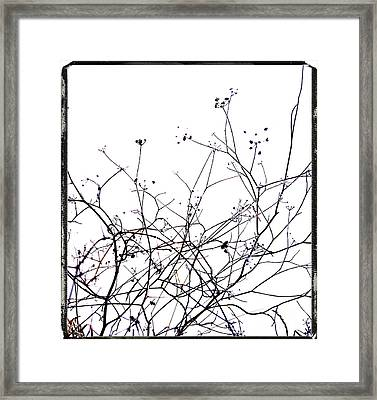 Stems Framed Print by Bernard Jaubert