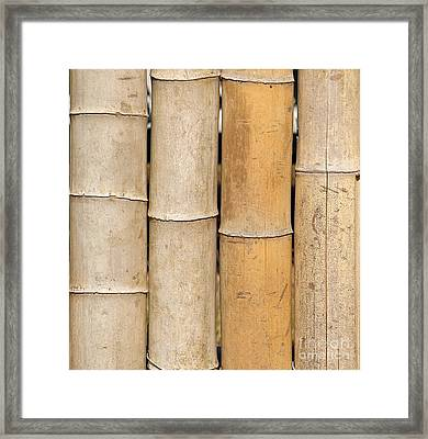 Straight Bamboo Poles Framed Print by Yali Shi