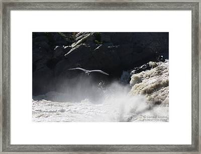 Strength In Flight Framed Print