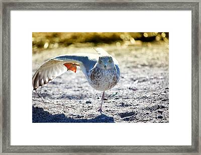 Stretch It Out Framed Print by Karol Livote