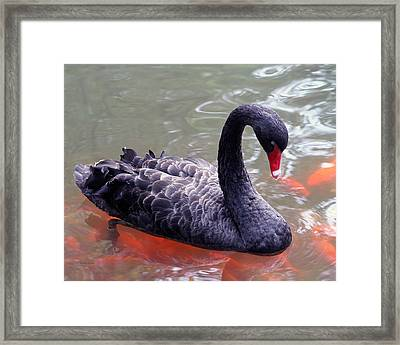 Strike A Pose Framed Print